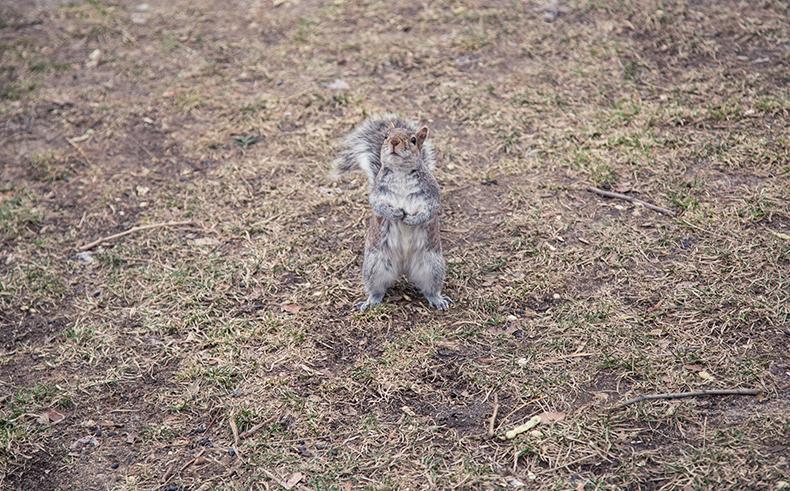 écureuil-mamie-Boude-c