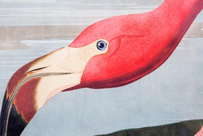 flamingo-mamieboude11