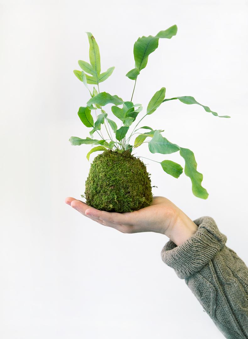 Green-factory-mamieb6