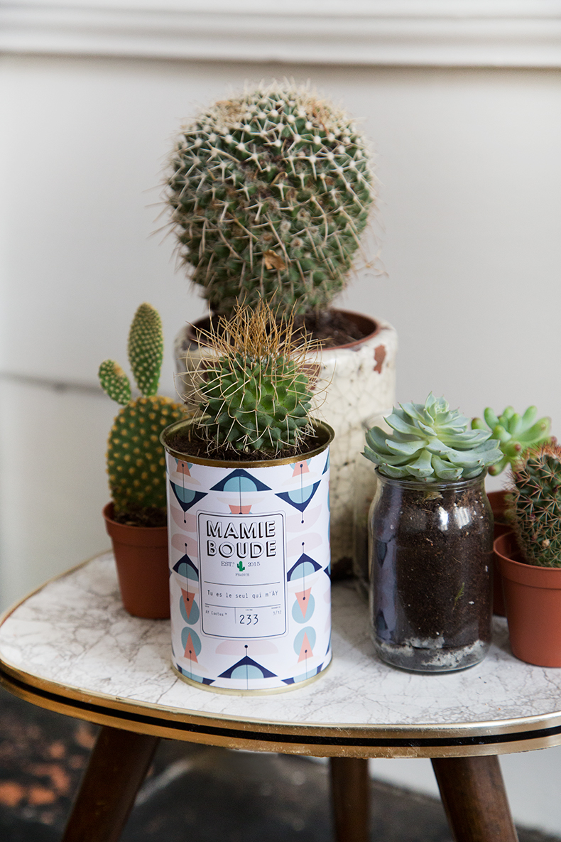 mamieboude-x-Ay-Cactus1