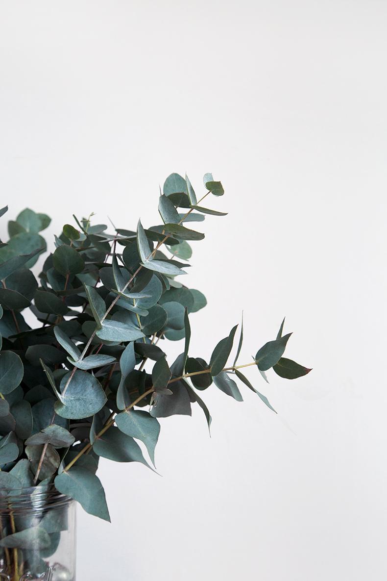 Feuille D Eucalyptus Bouquet l'eucalyptus – notre green touch' de l'hiver – mamie boude